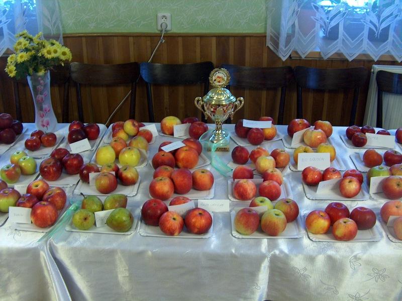 Soubor ovoce, který vyhrál 1. místo na výstavě v Machové od L. Ťulpy
